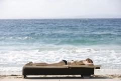 Presley-sunchair_1