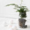 PureWhite07 100x100 - IRISLIGHTS valguskett Pure White, 20 palli