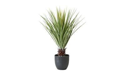 079 081 00 400x240 - Palm mustas potis
