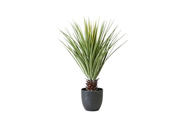 079 081 00 600x407 - Palm mustas potis