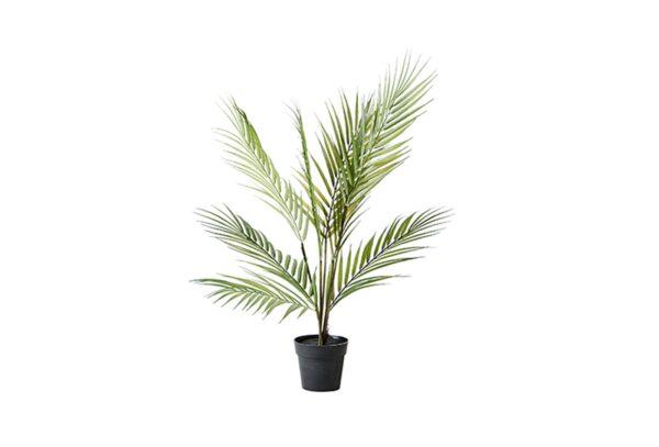 079 093 00 600x407 - Palm mustas potis
